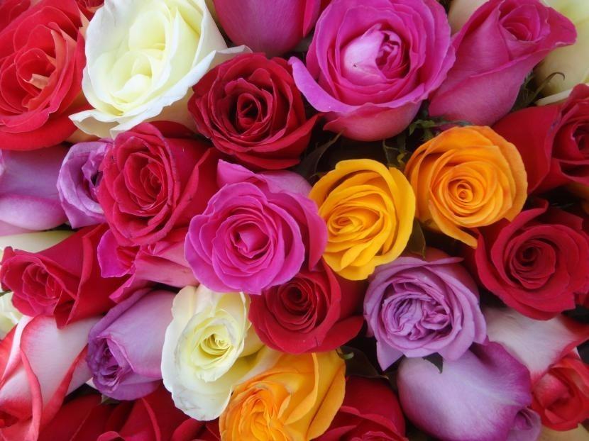 Hermosas Exoticas Flores Rosas Rosales De Colores Semillas S 59