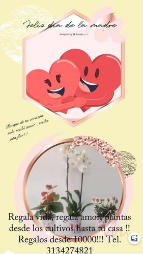 hermosas plantas y lindos detalles para el día de la madre