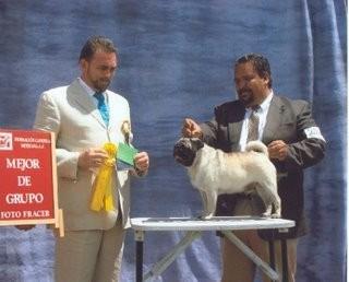 hermoso cachorro pug pedigree internacional compacto  !!