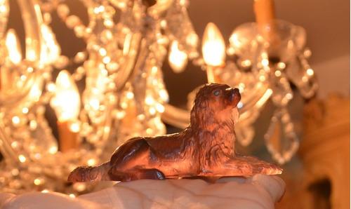 hermoso perro cocker spaniel en miniatura