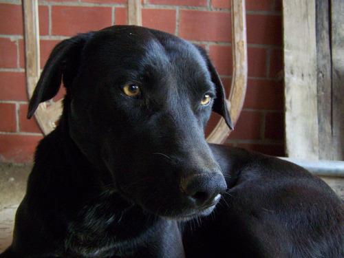 hermoso perro en adopción