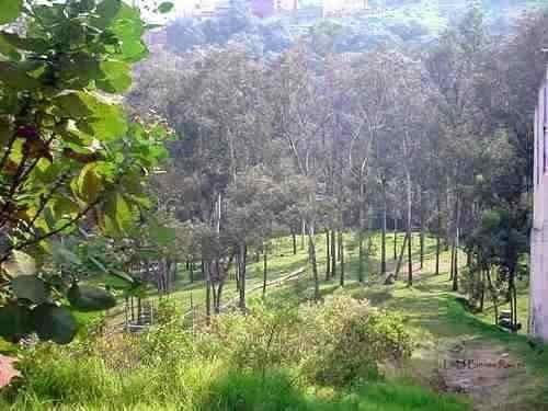 hermoso terreno boscoso con vistas espectaculares