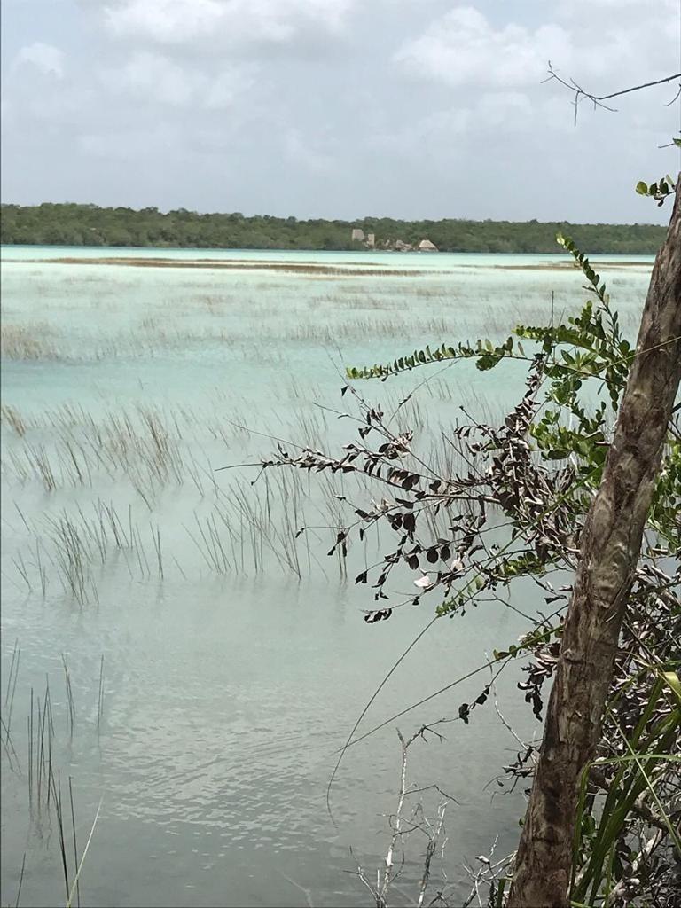 hermoso terreno con orilla a la laguna de bacalar,