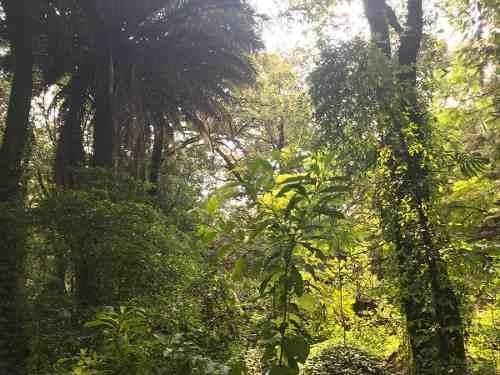 hermoso terreno en ahuacatitlán