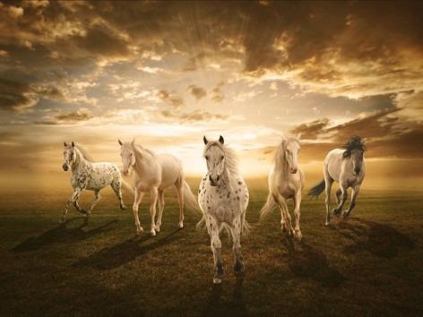 hermosos caballos blancos en canvas de 140x100cm en 5 partes