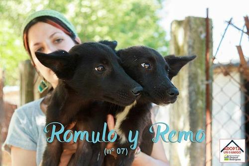 hermosos cachorros para ayudar q necesitan salir de zoonosis