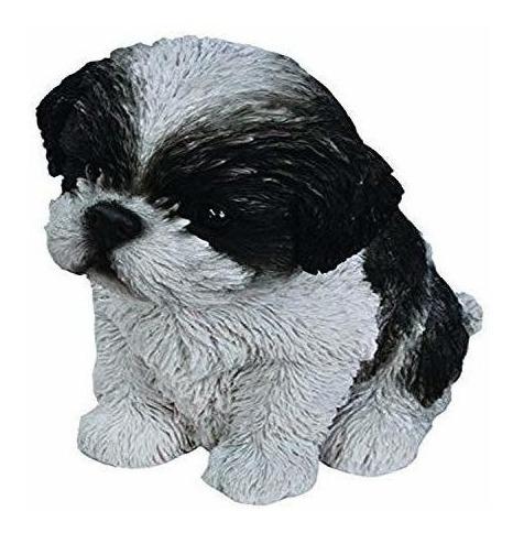Hi Line Sentado Shih Tzu Puppy