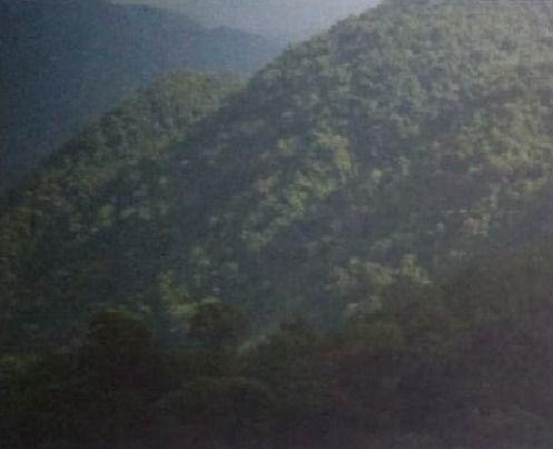 hidalgo 800 hectareas ideal para cafe, frutas, grano, etc. $38'000,000
