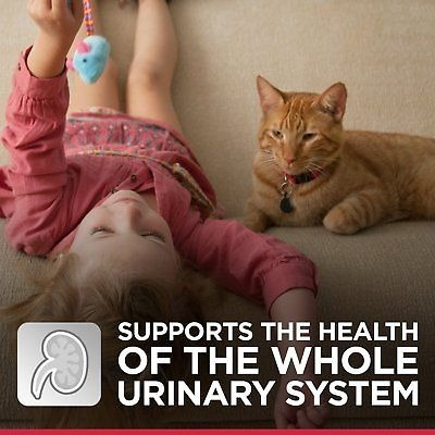 hill \ 's science diet adulto bola de pelo urinaria control