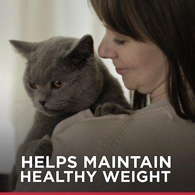 hill \ 's science dieta dieta adulto sabroso entrada varied