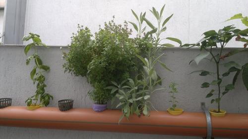 hirdoponia, cultivos hidroponicos!