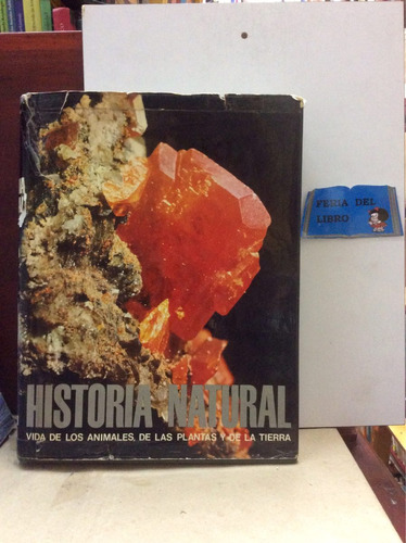 historia natural. geología. instituto gallach. rocas