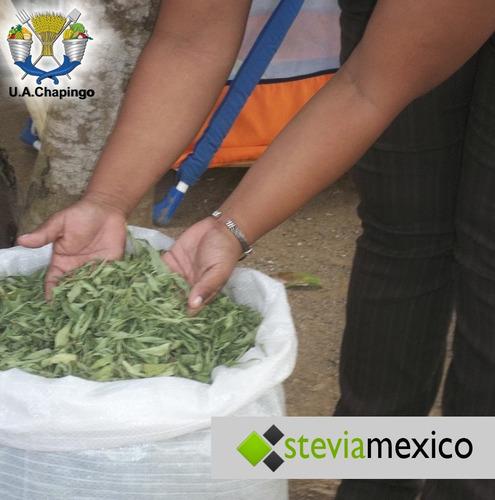 hoja entera de stevia 1 kg