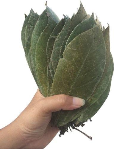 hojas secas de graviola guanabana para te excelente calidad