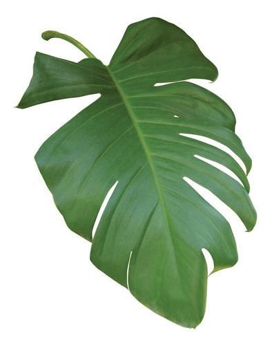 hojas verdes, triptico med. cuadro decorativo lienzo canvas