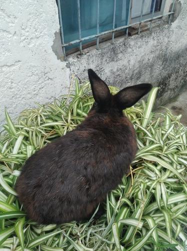 hola vendo conejos tengo 3 macho y 1 hembra