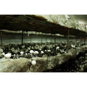 Hongos Champiñones Blanco Gastronomicos X  5 Kg Productor