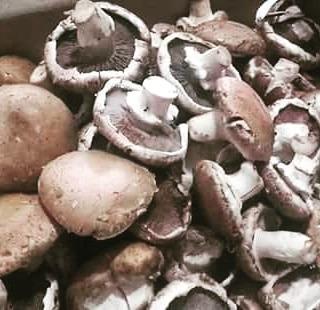 hongos portobello  frescos 5 kg productores directos