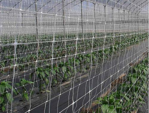 hortomallas para entutorar vegetales 1.5x250mt