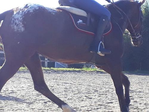 hospedagem p/ seu cavalo atleta, de passeio, pônei, vendas