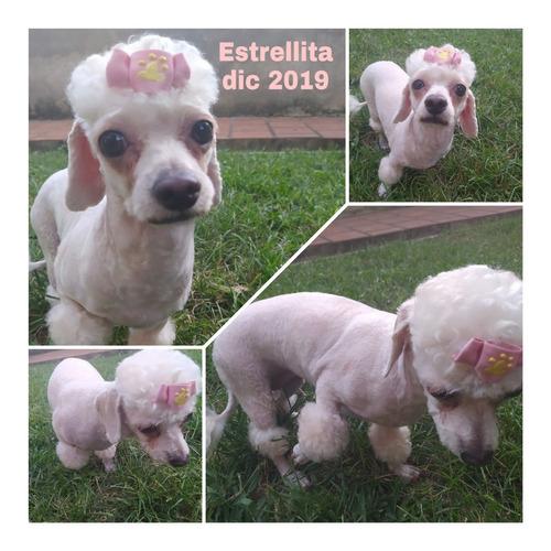 hospedaje canino, curso d peluquería canina tramites d viaje