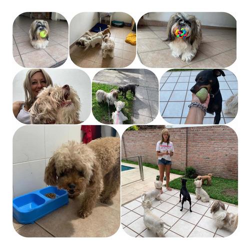 hospedaje para mascotas brings love