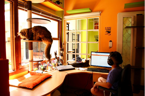 hotel boutique felino - guardería felina - pensionado gatos