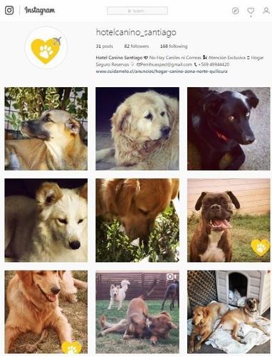 hotel canino santiago - perrihuéspedes