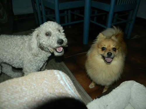 hotel guardería de perros caniches,cocker razas pequeñas!!!