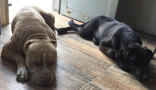 hotel, guardería y alojamiento de perros