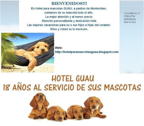 hotel  guau legal pensionado alojamiento perro gato mascota