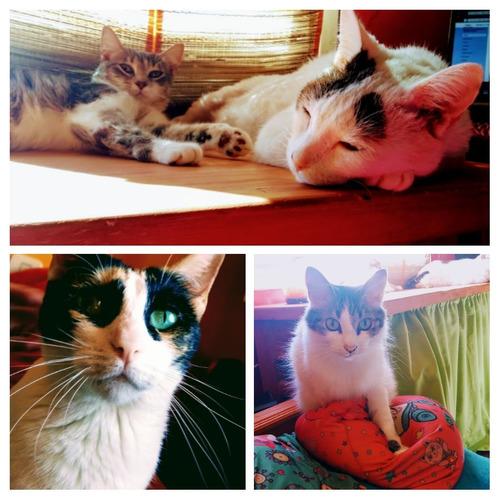 hotel para gatos /as hospedaje felino spa michuno