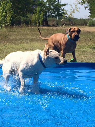 hotel pensionado guarderia canina con piscina