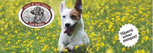 hotel spa canino los robles perros mascotas paseo naturaleza