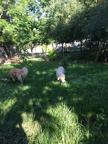 hotel y criadero shadows (pensionado canino)