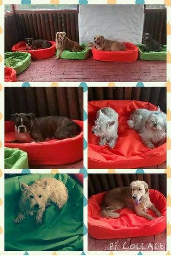 hotel y guardería canina playdog´s madrid, mosquera, bogota