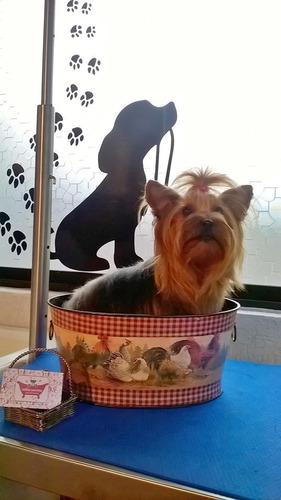 hotel y peluqueria canina y felina