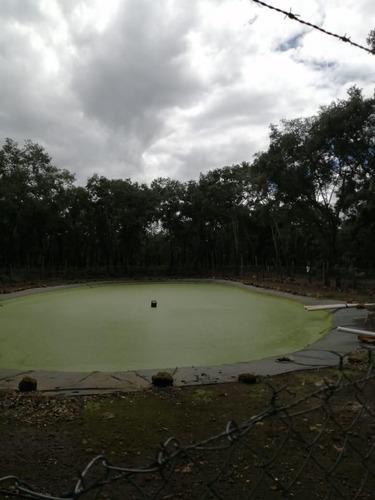 huerta de aguacate en venta
