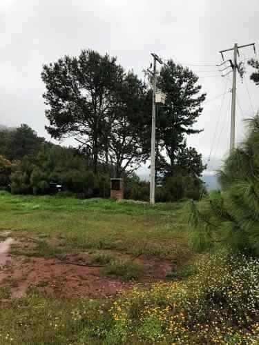 huerta de aguacates en venta en mazamitla
