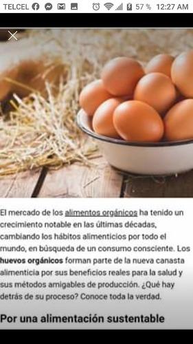 huevo 100% orgánico