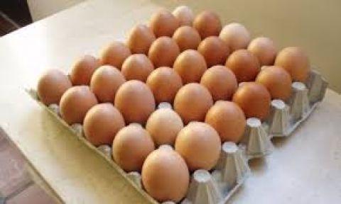 huevo al mayor por caja de 12 cartones