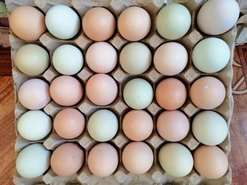 huevos 100% campesinos y rojo