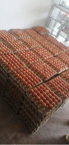 huevos por mayor
