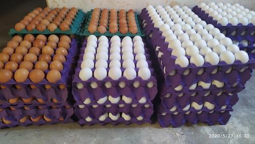 huevos por mayor n°2 229 por maple, 2850 n1