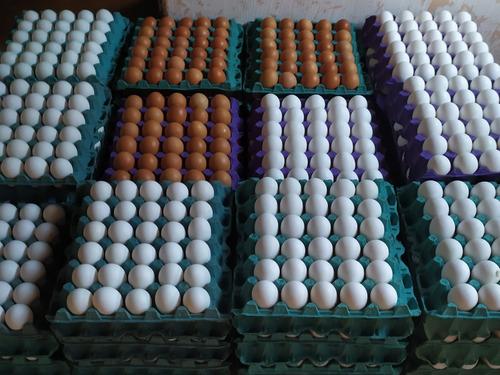 huevos por mayor n2°221