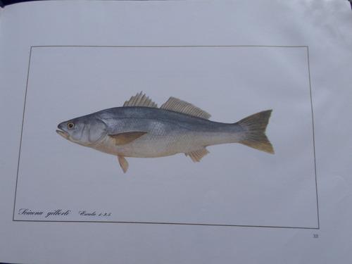 iconografia de los principales recursos pesqueros de chile