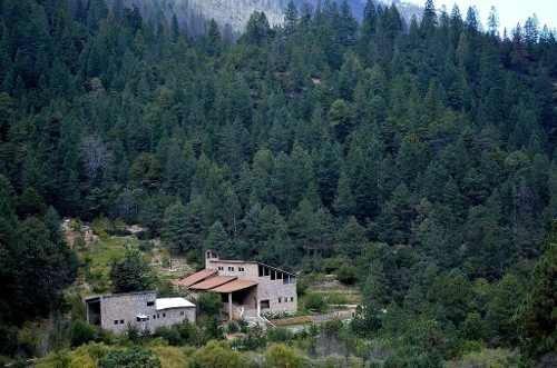 id:99138, **oportunidad**excelente lote ligeramente descendente rodeado de pinos y hermosa vegetación. cuenta con 1,600 m2 con 32 de frente por 50 de fondo. ubicado dentro del fraccionamiento bosq