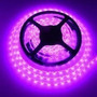 Cinta Led 3528 300 Leds 5 Mts 12v - Color Fucsia