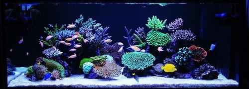 iluminação aquário peixes