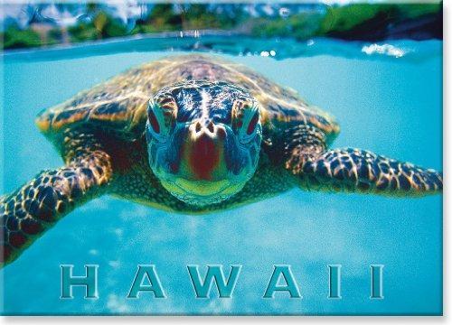 imanes de refrigerador,imán hawaiano de colección de art..